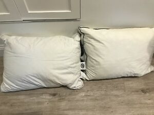 Pacific coast goose down queen size pillows