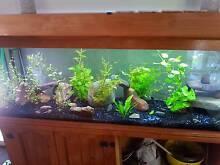 5 foot fish tank and stand Greta Cessnock Area Preview