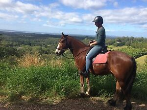 Experienced horse person wanted Cooroibah Noosa Area Preview