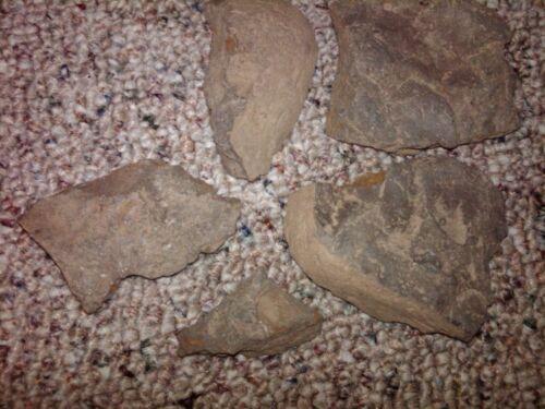 Shell Fossil Rocks, locally sourced near Syracuse NY