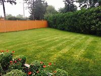 A&M LANDSCAPING - GRASS CUTTING SERVICES