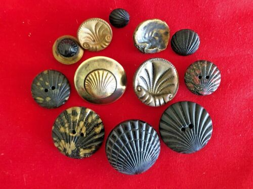 """Antique Buttons ~Collection  of 12 SEASHELLS, various materials, 7/16""""-1 1/16"""""""