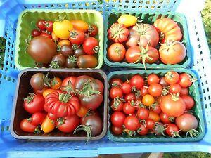 Mix of Italian heritage tomato seeds, 6 packs, 10 seeds each