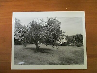 Vintage Glossy Press Photo Natick Mass The Dawbons Backyard Apple (The Natick Collection)