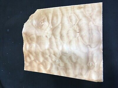 Quilted Burl Maple Raw Wood Veneer Sheets 8 X 9.5 Inches 142nd Lot 122