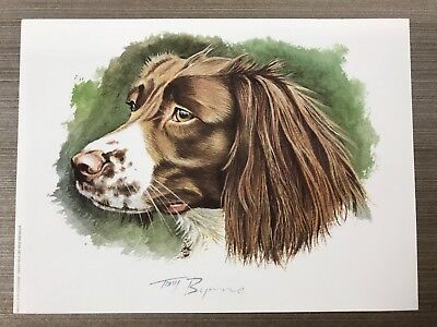 Spaniel Dog Print by Tony Bryne