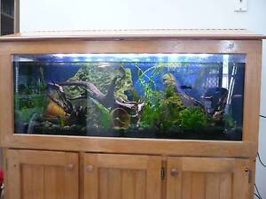 4 Foot Aquarium for sale - willing to sell bits seperately Reservoir Darebin Area Preview