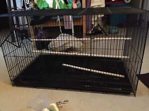 Large long bird cage and accessories