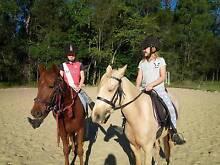 Australian Riding Pony for Sale Broadbeach Waters Gold Coast City Preview