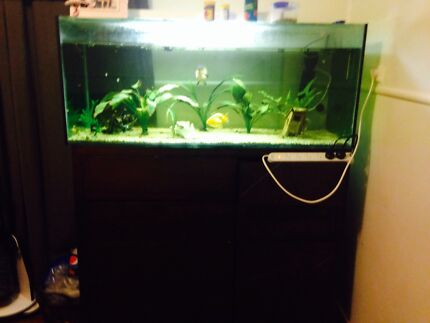 4ft fish tank Deception Bay Caboolture Area Preview