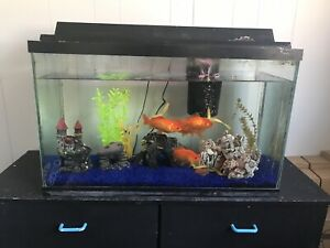 30 gallon long fish tank