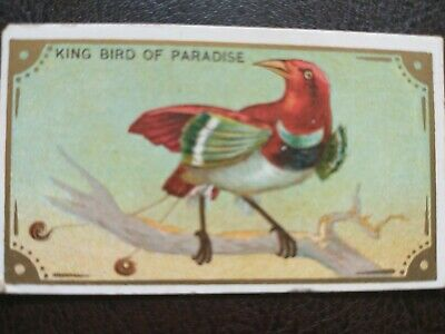 1910 T42 Mecca Bird Series King Bird of Paradise (from set building)
