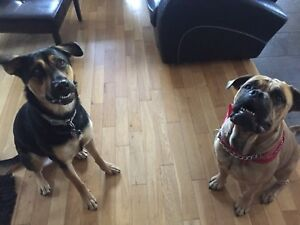 Offering dog training sessions