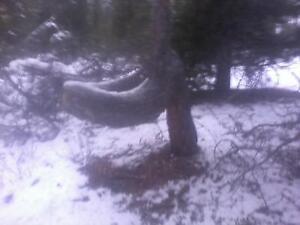 """""""Toilet Seat"""" Tree"""