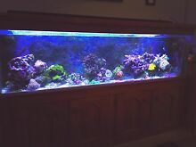 Marine Aquarium 6 feet Port Adelaide Port Adelaide Area Preview