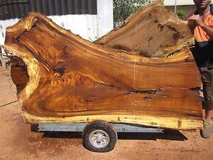 Monkey Pod (Albizia lebbeck) Timber Slab Karama Darwin City Preview