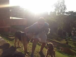 Pets/House/ Dogs sitter CBD, North Melbourne & surrounding area Parkville Melbourne City Preview