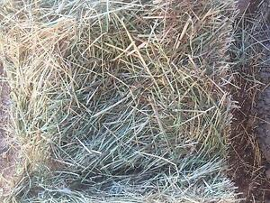Low sugar hay for horses Rochester Campaspe Area Preview