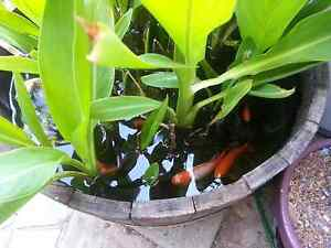 Fish pond  Relax Melville Melville Area Preview
