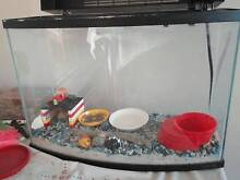 2 hermit crabs  plus complete tank set up Balga Stirling Area Preview