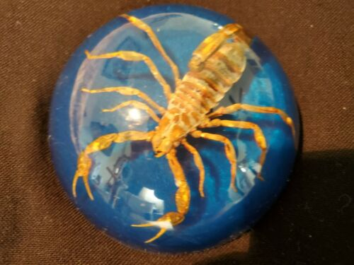 Scorpion fossil paperweight