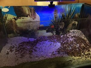 """Ultimate Hermit Crab """"Crabitat"""" and accessories Langwarrin Frankston Area Preview"""