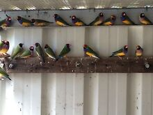 All types of birds parrots South Tamworth Tamworth City Preview