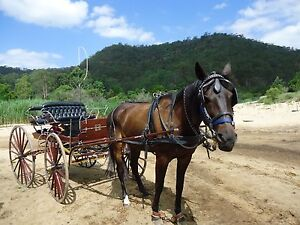 Buggy/Cart and Joe the horse plus all gear Freemans Reach Hawkesbury Area Preview