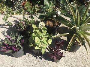 Cheap plants less $5 each for 7 plants