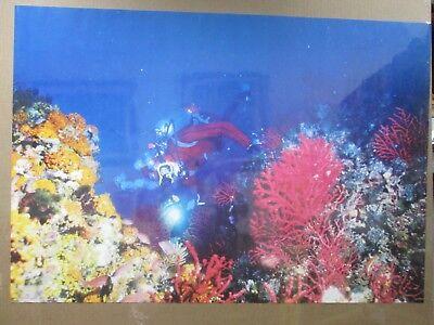 Vintage Scuba diving diver coral reef Large 1970's Inv#1376