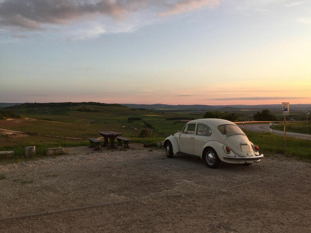Käfer guckt gen Sonnenuntergang