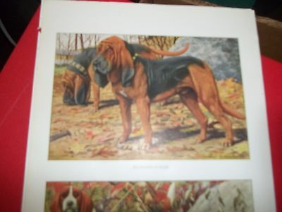 Louis A Fuertes Bloodhound Dogs bookplate from 1919 National Geographic Magazine