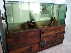 8ft 8x2.5x2 (2.4m x 800mm h x 600mm d) aquarium fish tank setup Hinchinbrook Liverpool Area Preview