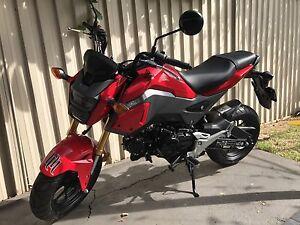 Honda Grom New Canterbury Canterbury Area Preview