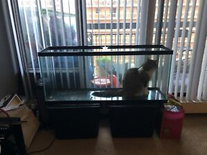 55 gallon fish tank with light and heater
