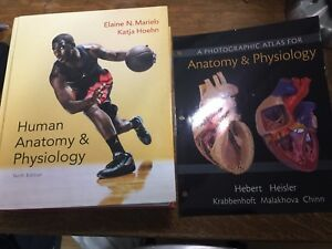 Human Anatomy & Physiology 10th Edition By Marieb & Hoehn