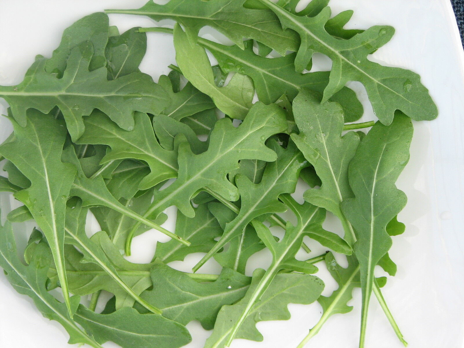 Suffolk Herbs 500 Seeds Organic Rocket Rucola