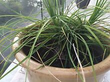 Plant but not with pot Seaforth Manly Area Preview