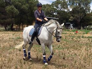 Lovely Grey thoroughbred Gelding Tatura Outer Shepparton Preview