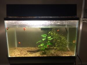 10G AQUARIUM WITH EVERYTHING YOU NEED $60