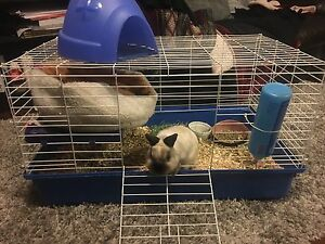 Animal cage rabbit/guinea pig etc.