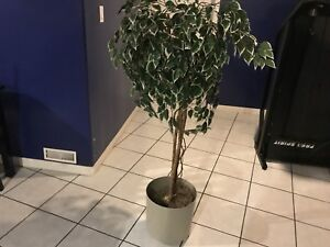 Beautiful Artificial Tree for Sale!