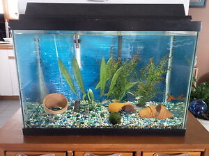 10 gallon community fish tank