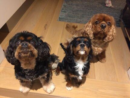 Wanted: Dog/house sitter Cottesloe/Swanbourne