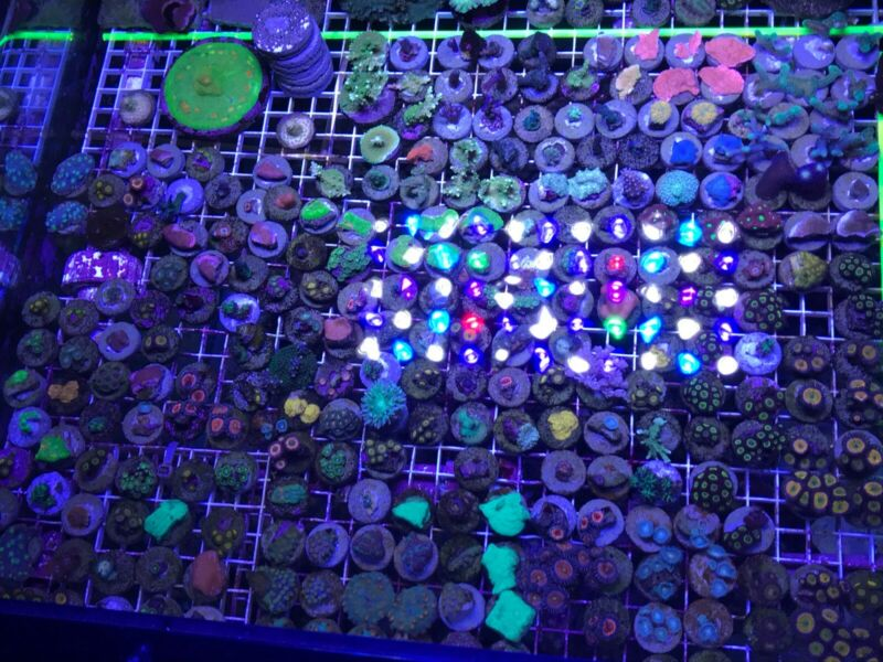 10 Coral Frag Pack Of Random Colorful Corals! *Overnight Shipping*