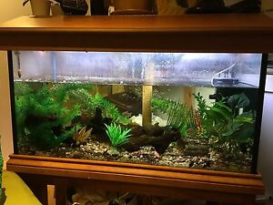Large 3 ft Aquarium with treated pine hood and stand Meadow Heights Hume Area Preview