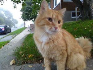 Errant ou chat du cartier?
