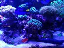 Complete marine aquarium Beechboro Swan Area Preview