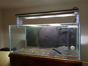 5 Foot Aquarium (150cm x 70cm x 70cm), light and cabinet Brompton Charles Sturt Area Preview