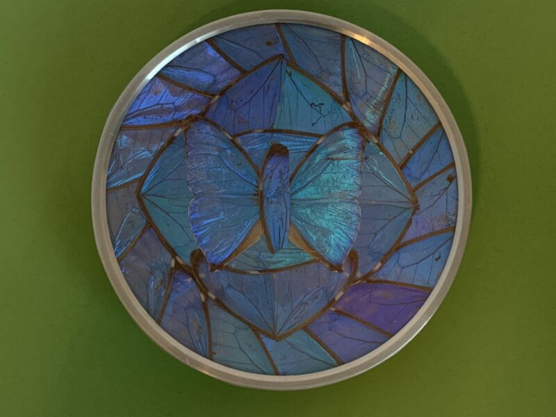 "Real Butterfly 🦋 Wings Iridescent Blue Wall Small Plate 5.5"" BRAZIL 🇧🇷"